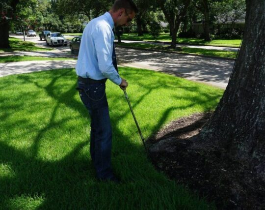 Arborist-Consultations-McAllen Tree Trimming and Stump Grinding Services-We Offer Tree Trimming Services, Tree Removal, Tree Pruning, Tree Cutting, Residential and Commercial Tree Trimming Services, Storm Damage, Emergency Tree Removal, Land Clearing, Tree Companies, Tree Care Service, Stump Grinding, and we're the Best Tree Trimming Company Near You Guaranteed!