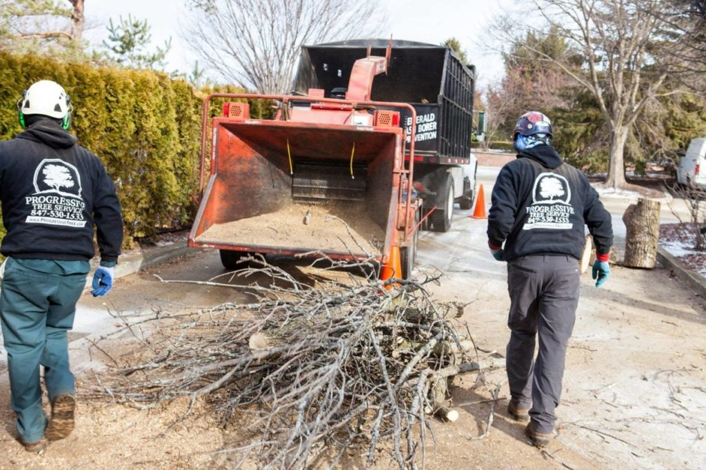 Commercial-Tree-Services-McAllen Tree Trimming and Stump Grinding Services-We Offer Tree Trimming Services, Tree Removal, Tree Pruning, Tree Cutting, Residential and Commercial Tree Trimming Services, Storm Damage, Emergency Tree Removal, Land Clearing, Tree Companies, Tree Care Service, Stump Grinding, and we're the Best Tree Trimming Company Near You Guaranteed!