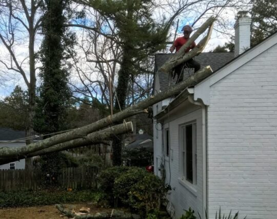 Emergency-Tree-Removal-McAllen Tree Trimming and Stump Grinding Services-We Offer Tree Trimming Services, Tree Removal, Tree Pruning, Tree Cutting, Residential and Commercial Tree Trimming Services, Storm Damage, Emergency Tree Removal, Land Clearing, Tree Companies, Tree Care Service, Stump Grinding, and we're the Best Tree Trimming Company Near You Guaranteed!