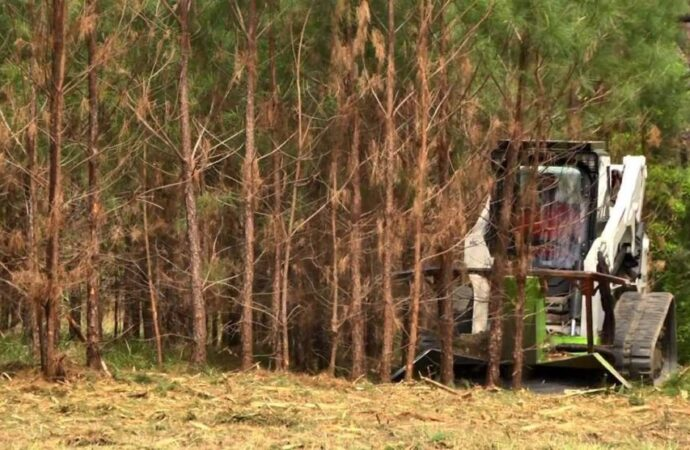 Land-Clearing-McAllen Tree Trimming and Stump Grinding Services-We Offer Tree Trimming Services, Tree Removal, Tree Pruning, Tree Cutting, Residential and Commercial Tree Trimming Services, Storm Damage, Emergency Tree Removal, Land Clearing, Tree Companies, Tree Care Service, Stump Grinding, and we're the Best Tree Trimming Company Near You Guaranteed!