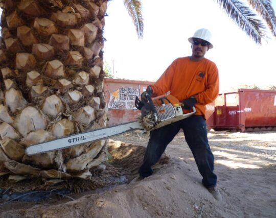 Palm-Tree-Removal-McAllen Tree Trimming and Stump Grinding Services-We Offer Tree Trimming Services, Tree Removal, Tree Pruning, Tree Cutting, Residential and Commercial Tree Trimming Services, Storm Damage, Emergency Tree Removal, Land Clearing, Tree Companies, Tree Care Service, Stump Grinding, and we're the Best Tree Trimming Company Near You Guaranteed!
