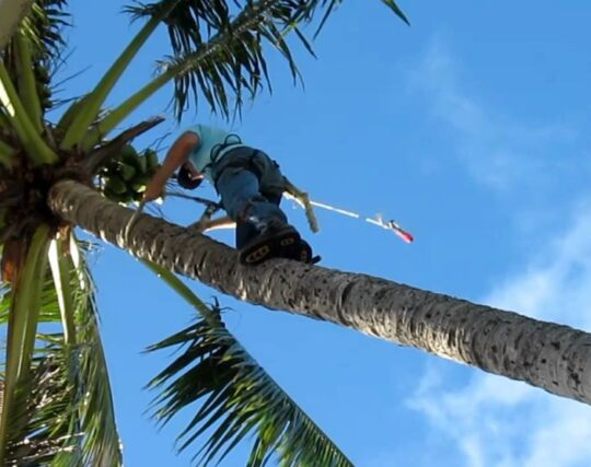Palm Tree Trimming and Removal-McAllen Tree Trimming and Stump Grinding Services-We Offer Tree Trimming Services, Tree Removal, Tree Pruning, Tree Cutting, Residential and Commercial Tree Trimming Services, Storm Damage, Emergency Tree Removal, Land Clearing, Tree Companies, Tree Care Service, Stump Grinding, and we're the Best Tree Trimming Company Near You Guaranteed!