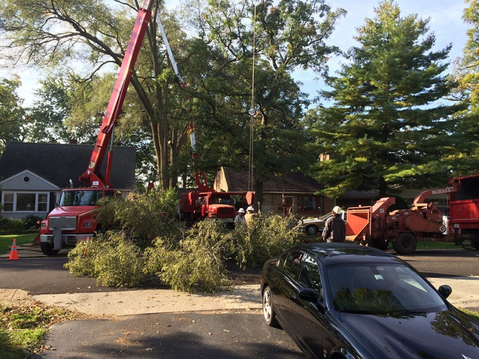 Residential-Tree-Services-McAllen Tree Trimming and Stump Grinding Services-We Offer Tree Trimming Services, Tree Removal, Tree Pruning, Tree Cutting, Residential and Commercial Tree Trimming Services, Storm Damage, Emergency Tree Removal, Land Clearing, Tree Companies, Tree Care Service, Stump Grinding, and we're the Best Tree Trimming Company Near You Guaranteed!