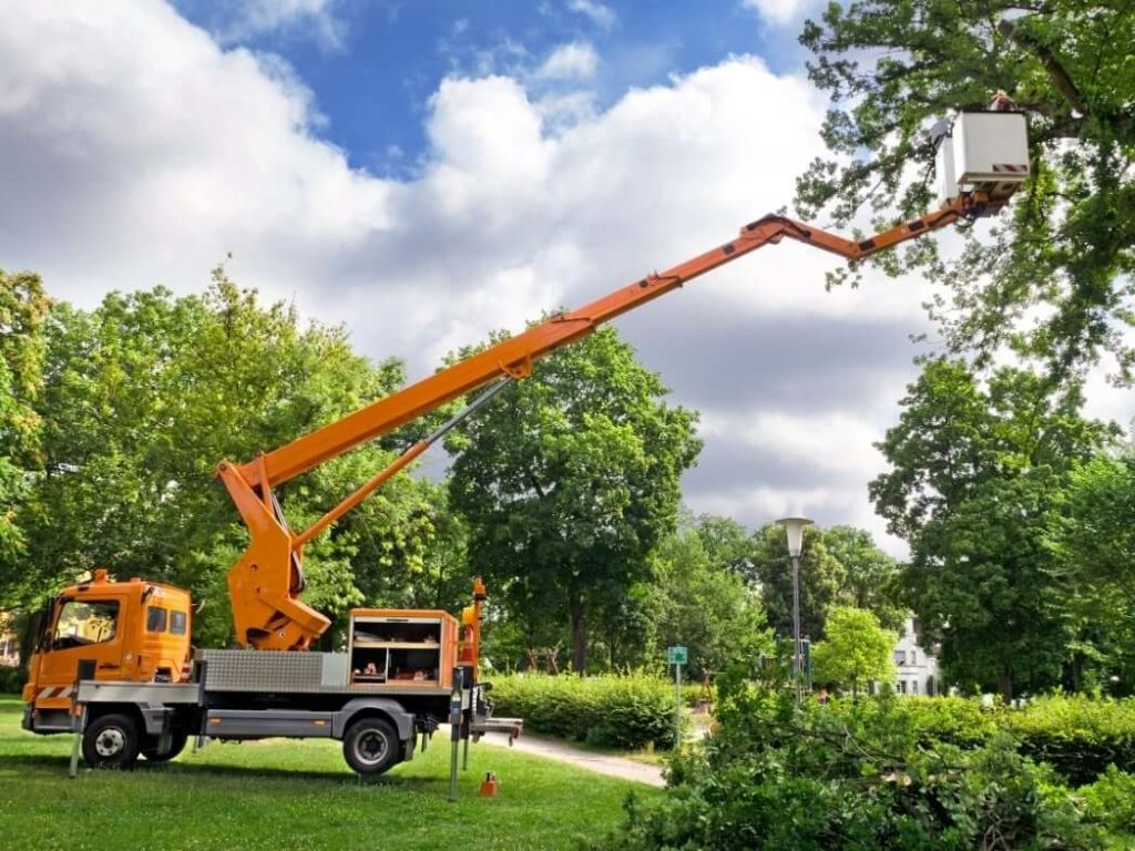 Services-McAllen Tree Trimming and Stump Grinding Services-We Offer Tree Trimming Services, Tree Removal, Tree Pruning, Tree Cutting, Residential and Commercial Tree Trimming Services, Storm Damage, Emergency Tree Removal, Land Clearing, Tree Companies, Tree Care Service, Stump Grinding, and we're the Best Tree Trimming Company Near You Guaranteed!