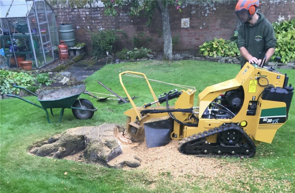 Stump-Removal-McAllen Tree Trimming and Stump Grinding Services-We Offer Tree Trimming Services, Tree Removal, Tree Pruning, Tree Cutting, Residential and Commercial Tree Trimming Services, Storm Damage, Emergency Tree Removal, Land Clearing, Tree Companies, Tree Care Service, Stump Grinding, and we're the Best Tree Trimming Company Near You Guaranteed!