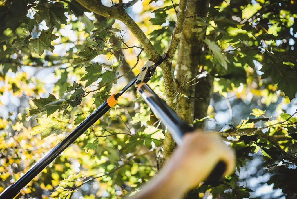 Tree-Pruning-McAllen Tree Trimming and Stump Grinding Services-We Offer Tree Trimming Services, Tree Removal, Tree Pruning, Tree Cutting, Residential and Commercial Tree Trimming Services, Storm Damage, Emergency Tree Removal, Land Clearing, Tree Companies, Tree Care Service, Stump Grinding, and we're the Best Tree Trimming Company Near You Guaranteed!