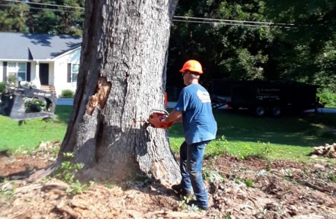 Tree-Removal-McAllen Tree Trimming and Stump Grinding Services-We Offer Tree Trimming Services, Tree Removal, Tree Pruning, Tree Cutting, Residential and Commercial Tree Trimming Services, Storm Damage, Emergency Tree Removal, Land Clearing, Tree Companies, Tree Care Service, Stump Grinding, and we're the Best Tree Trimming Company Near You Guaranteed!