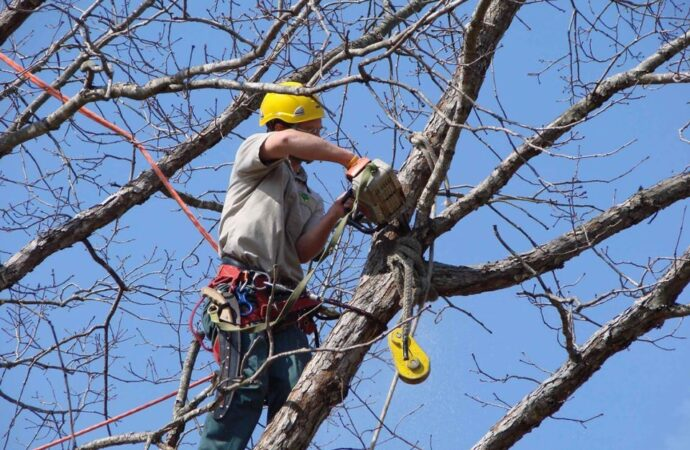 Tree-Trimming-McAllen Tree Trimming and Stump Grinding Services-We Offer Tree Trimming Services, Tree Removal, Tree Pruning, Tree Cutting, Residential and Commercial Tree Trimming Services, Storm Damage, Emergency Tree Removal, Land Clearing, Tree Companies, Tree Care Service, Stump Grinding, and we're the Best Tree Trimming Company Near You Guaranteed!