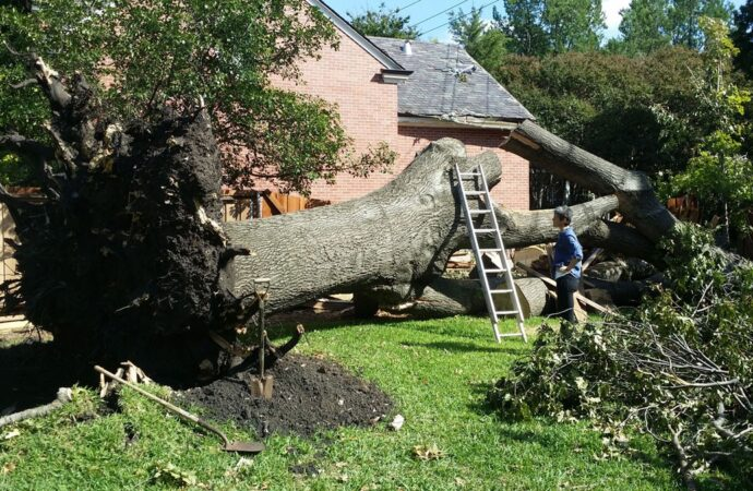 Edinburg-McAllen Tree Trimming and Stump Grinding Services-We Offer Tree Trimming Services, Tree Removal, Tree Pruning, Tree Cutting, Residential and Commercial Tree Trimming Services, Storm Damage, Emergency Tree Removal, Land Clearing, Tree Companies, Tree Care Service, Stump Grinding, and we're the Best Tree Trimming Company Near You Guaranteed!