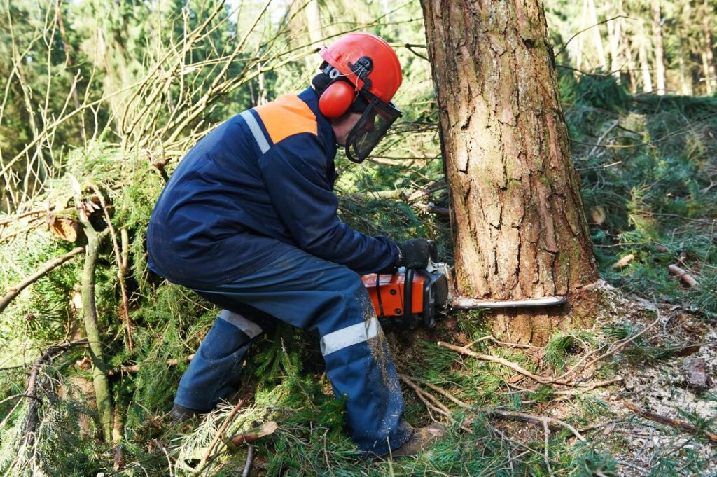 Faysville-McAllen Tree Trimming and Stump Grinding Services-We Offer Tree Trimming Services, Tree Removal, Tree Pruning, Tree Cutting, Residential and Commercial Tree Trimming Services, Storm Damage, Emergency Tree Removal, Land Clearing, Tree Companies, Tree Care Service, Stump Grinding, and we're the Best Tree Trimming Company Near You Guaranteed!