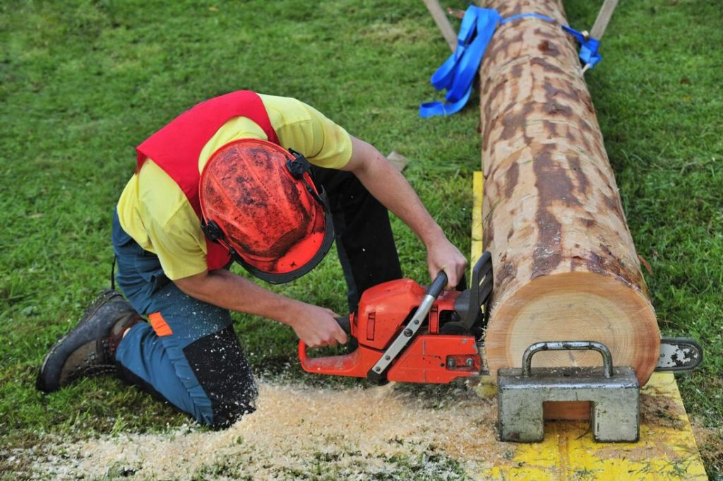 Pharr-McAllen Tree Trimming and Stump Grinding Services-We Offer Tree Trimming Services, Tree Removal, Tree Pruning, Tree Cutting, Residential and Commercial Tree Trimming Services, Storm Damage, Emergency Tree Removal, Land Clearing, Tree Companies, Tree Care Service, Stump Grinding, and we're the Best Tree Trimming Company Near You Guaranteed!